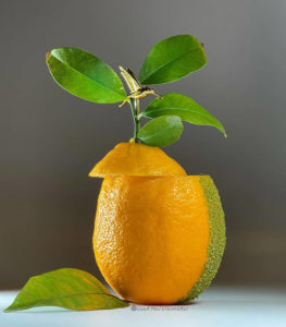 Лемончелло -настойка на лимоне